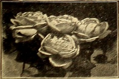 "Image from page 10 of ""American homes and gardens"" (1905)"