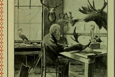 """Image from page 41 of """"American ornithology for the home and school"""" (1901)"""