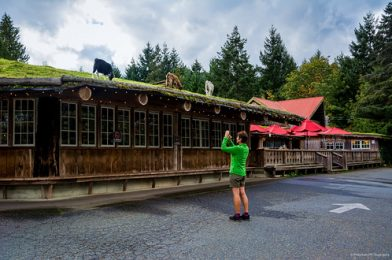 Goats on the Roof – The Old Country Market – Coombs, BC