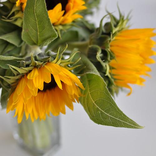 20120905 Happy yellow